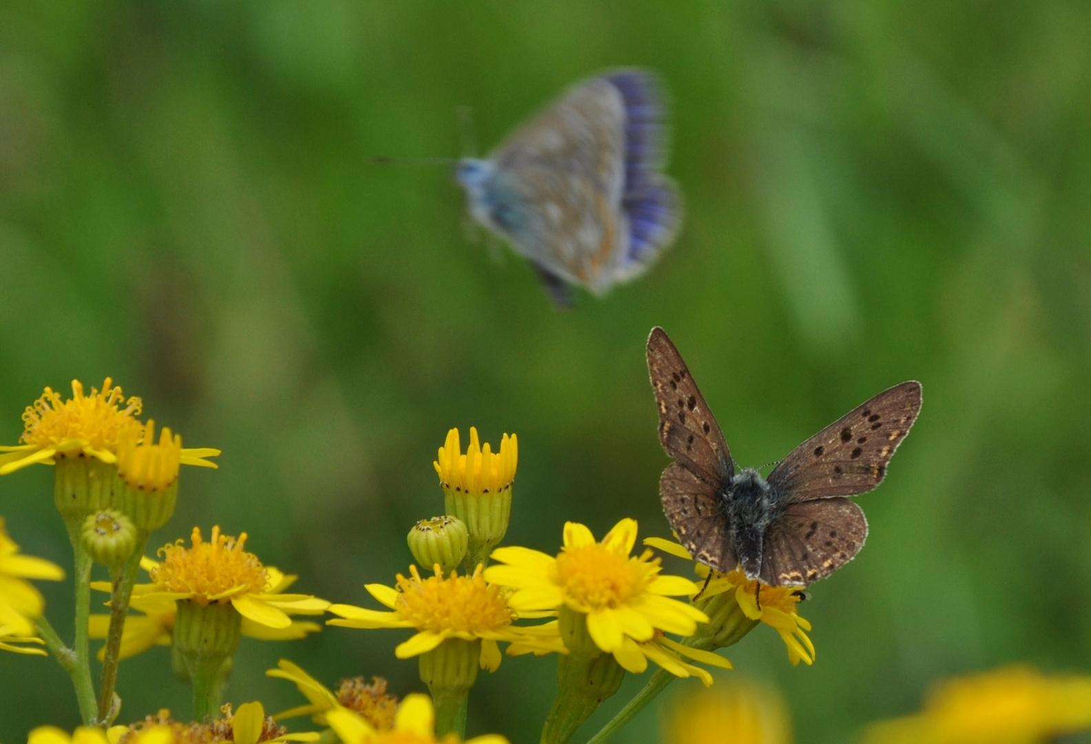 Schmetterling 23: