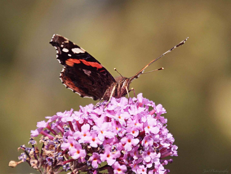 Schmetterling :)