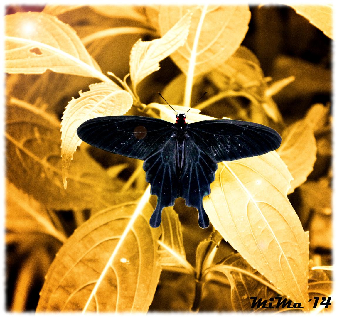 Schmetterling,...