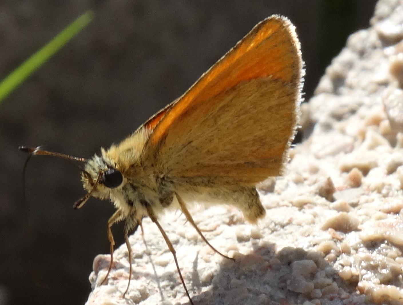 Schmetterling ...3...