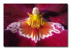 Schmetterling...?