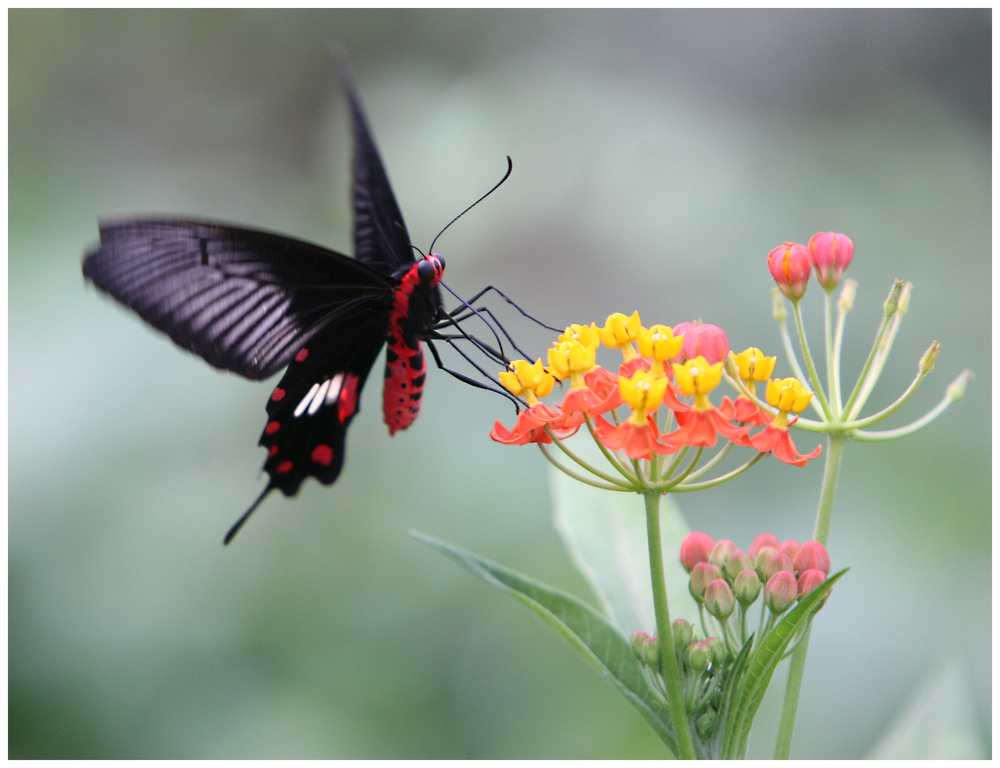 Schmetterling (9928)