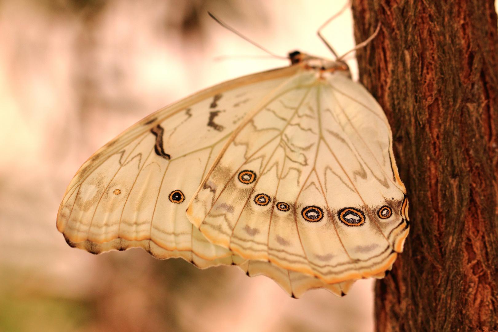 Schmetterling am Baum