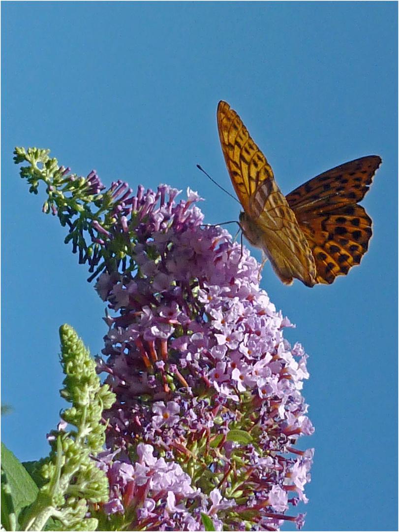 """""""Schmetterling am Mittagstisch"""""""