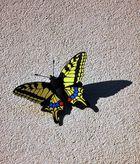 Schmetterling an der Hauswand