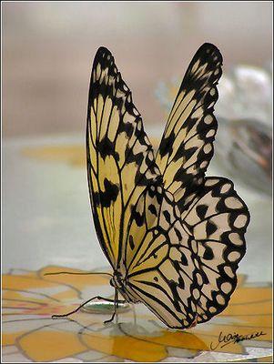 Schmetterling an der Kunstblüte (: