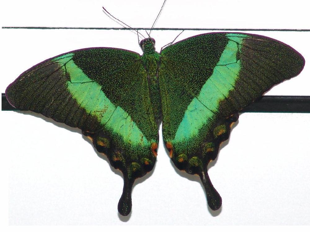 Schmetterling an Türe