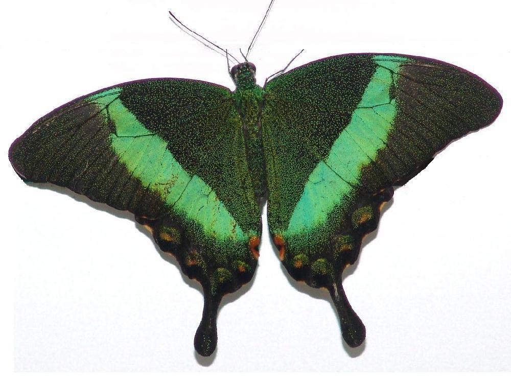 Schmetterling an Türe zum Zweiten