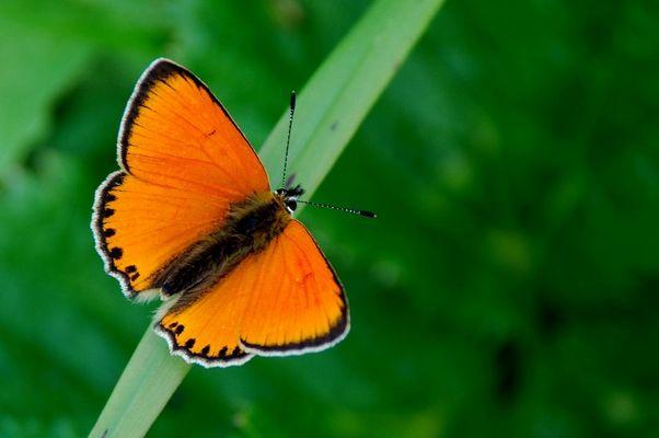Schmetterling auf 1800 m Höhe bei Galtür. Aber welcher?