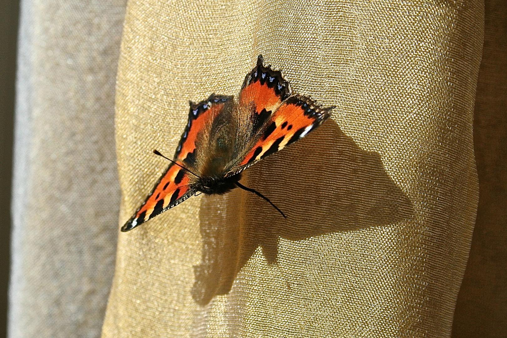 Schmetterling auf der Gardine