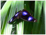 Schmetterling auf der Insel Mainau