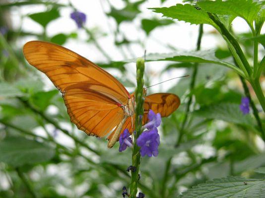 Schmetterling auf der Insel Mainau II