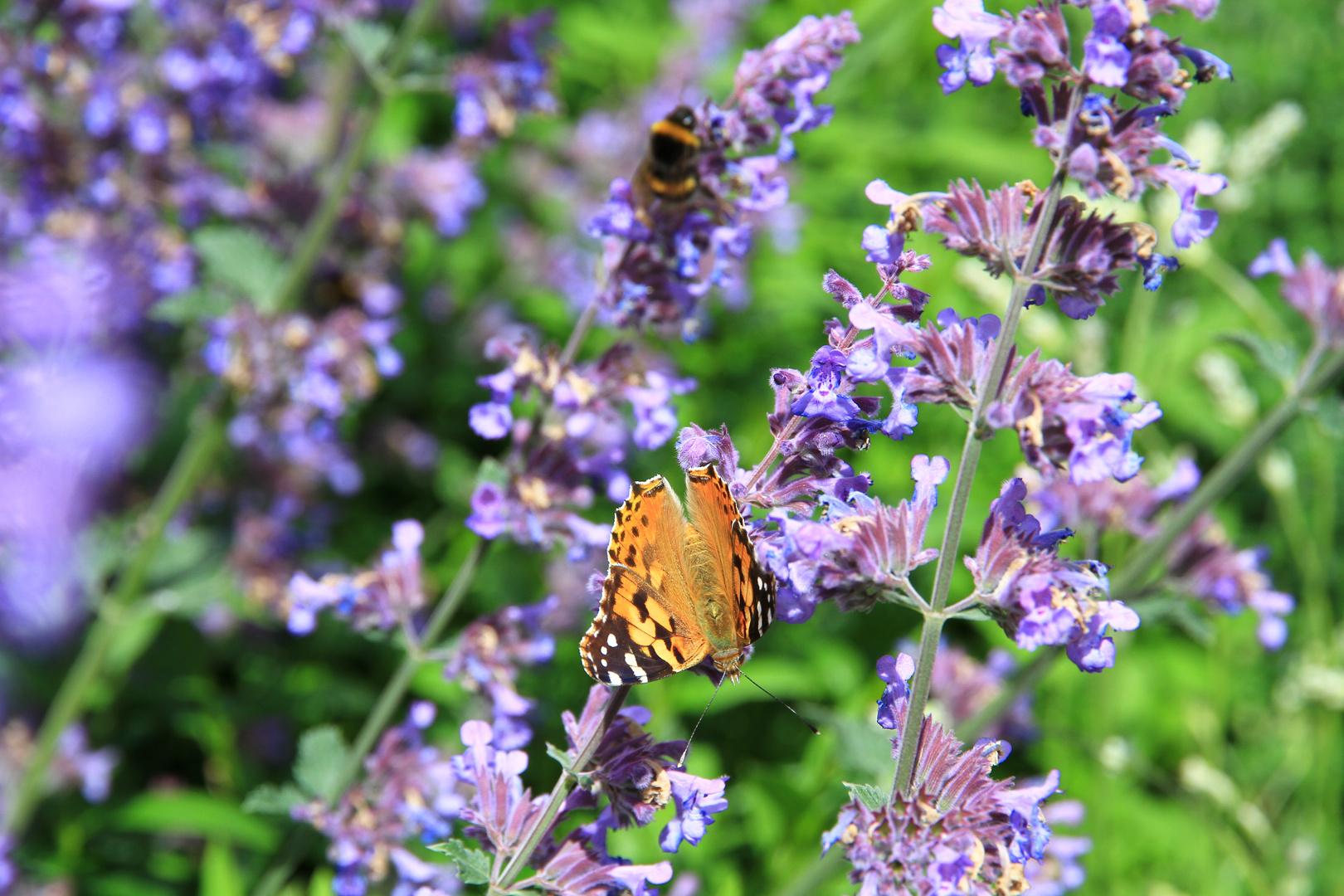 Schmetterling auf der LAGA 2014 in Zülpich