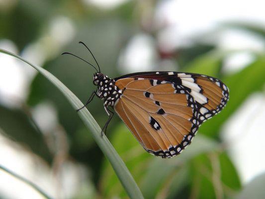 Schmetterling auf Mainau