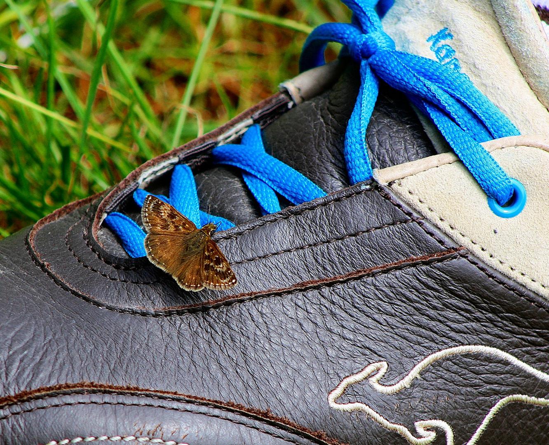 Schmetterling auf meinem Schuh