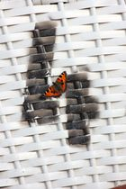 Schmetterling auf Strandkorb