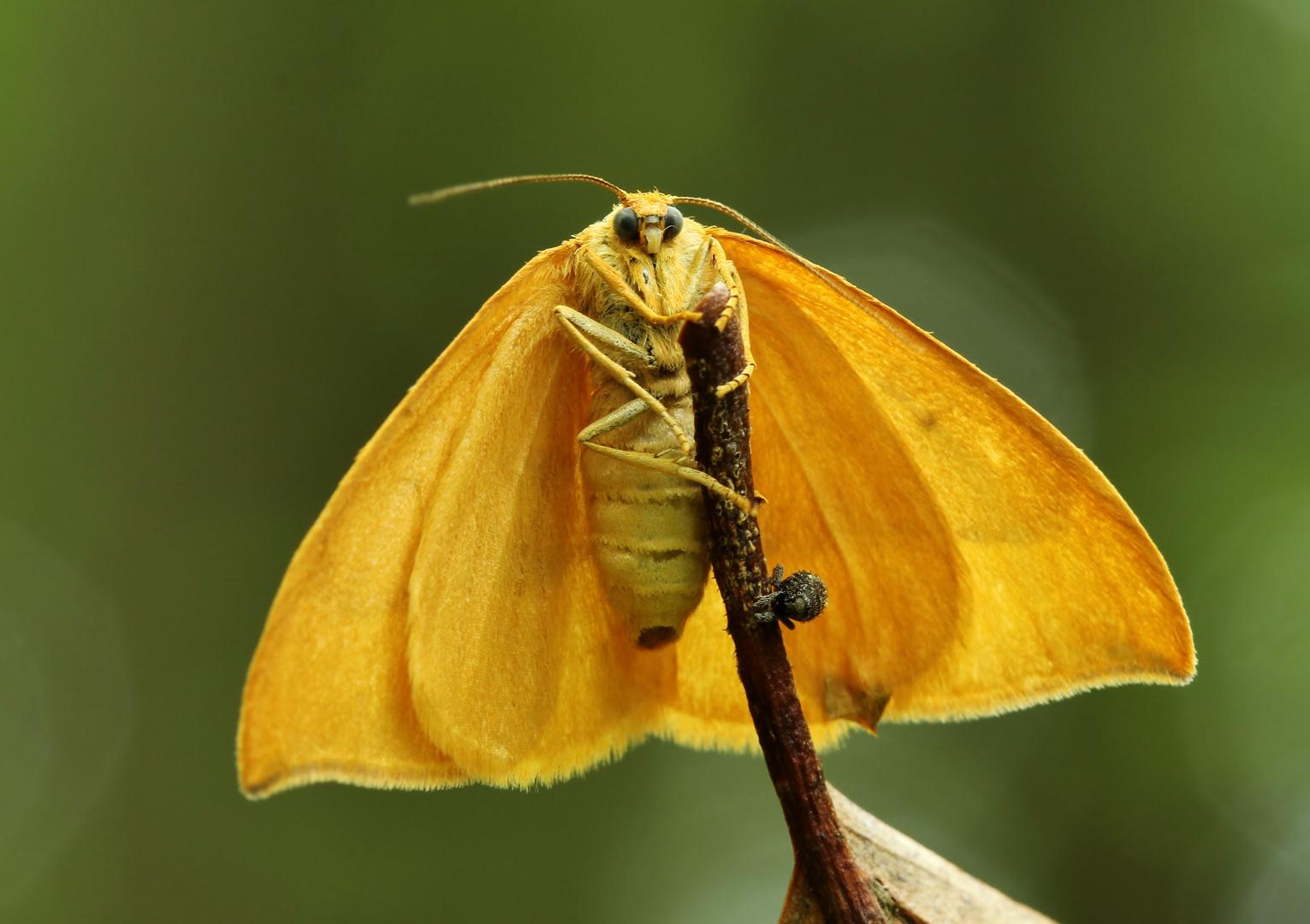 Schmetterling aus den Wald