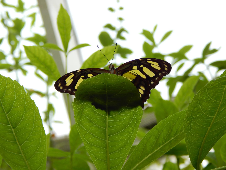 Schmetterling aus der Froschperspektive