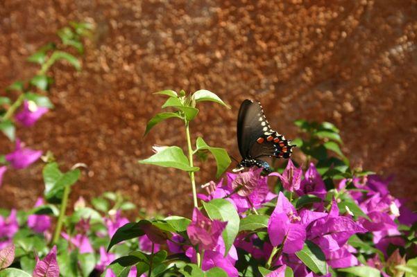 Schmetterling aus Mexico