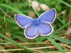 Schmetterling beim Sonnenbad...
