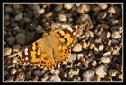 Schmetterling beim Sonnenbad