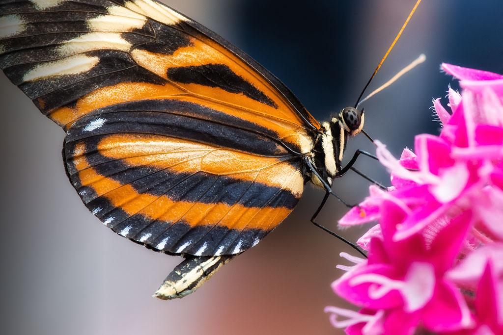 Schmetterling & Blume