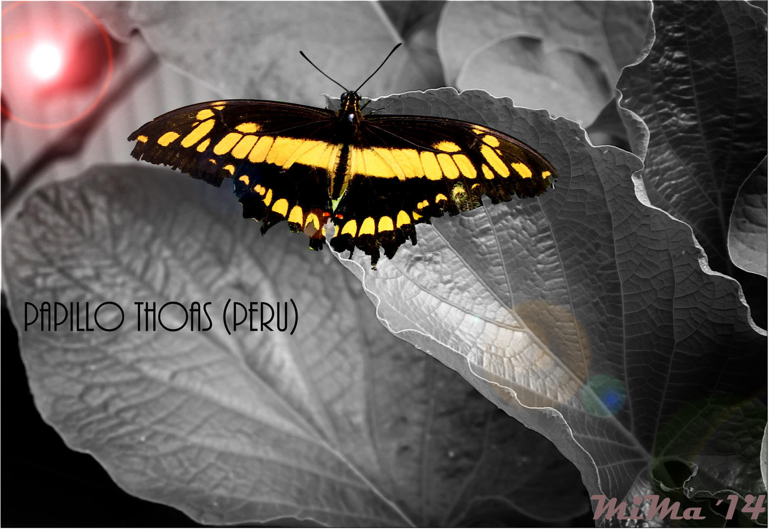 Schmetterling,...