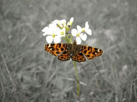 Schmetterling der Farbe bringt!