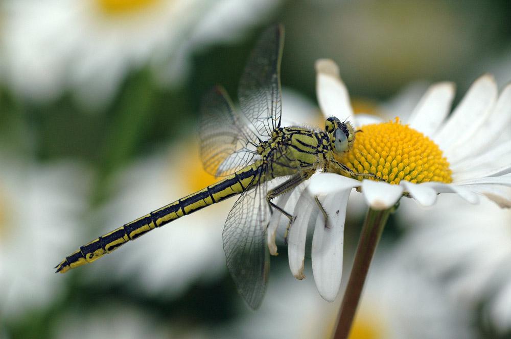 Schmetterling der Liebe ...