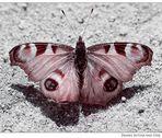 Schmetterling du kleines Ding...