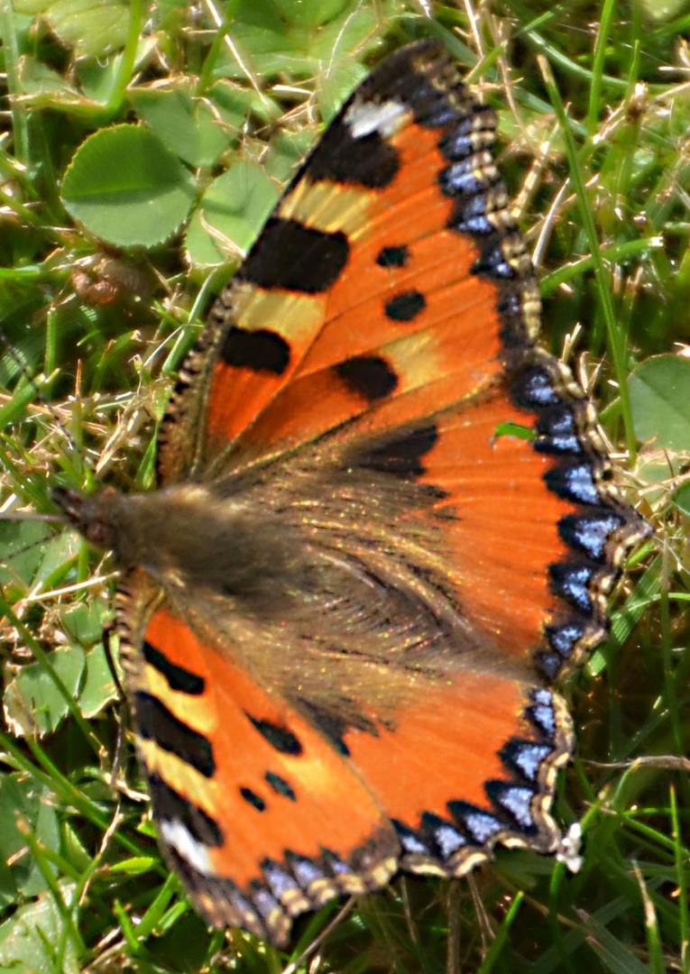 Schmetterling erwischt