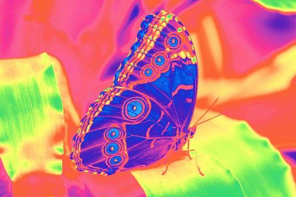 Schmetterling - extrem