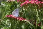 Schmetterling flieg......