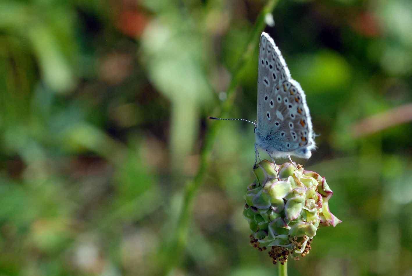 Schmetterling fliegt und geniesse Dich im Flug