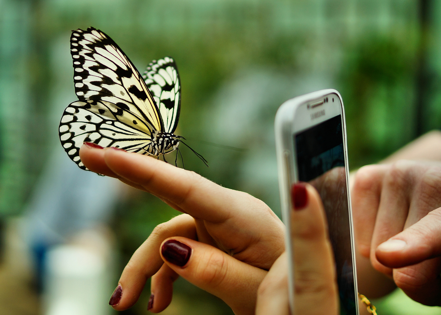 Schmetterling fotoshooting