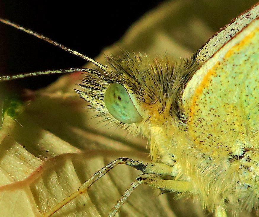 Schmetterling ganz nah