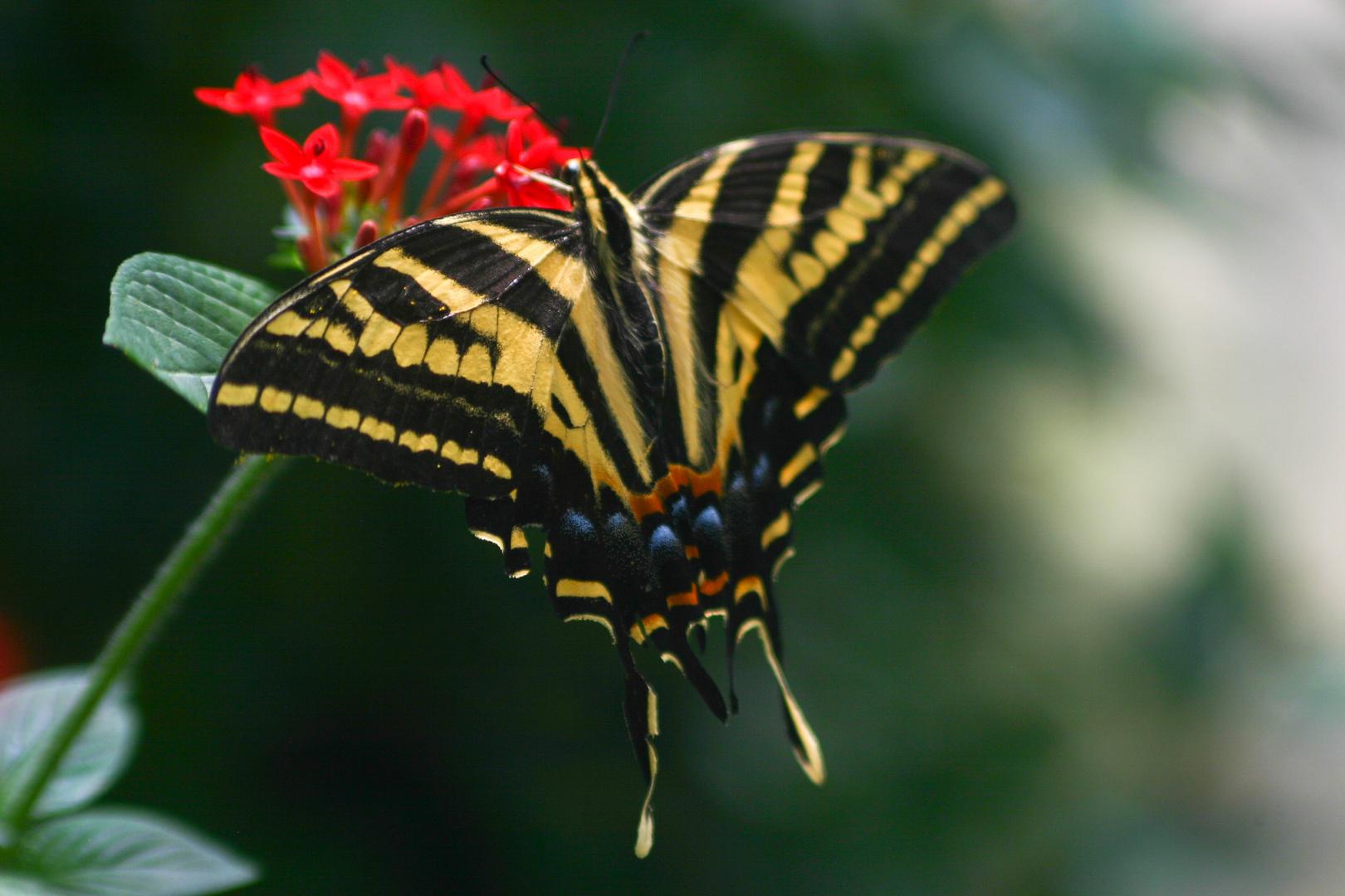 Schmetterling hat Hunger