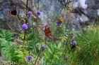 Schmetterling III