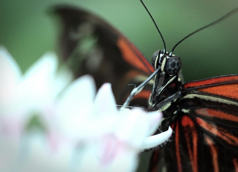 Schmetterling im botanischen Garten 5