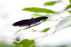 Schmetterling im Gegenlicht 01