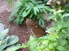 Schmetterling im Luisenpark Mannheim