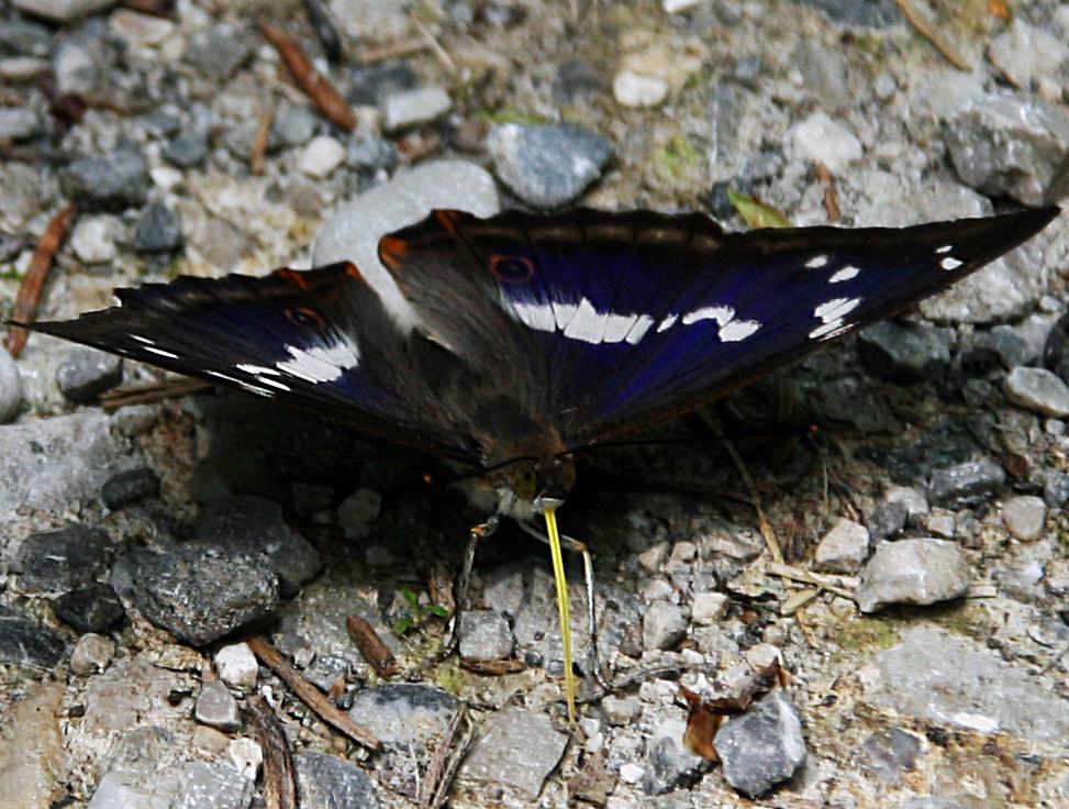 Schmetterling im Murnauer Moos
