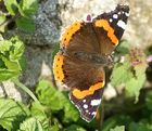 Schmetterling im November