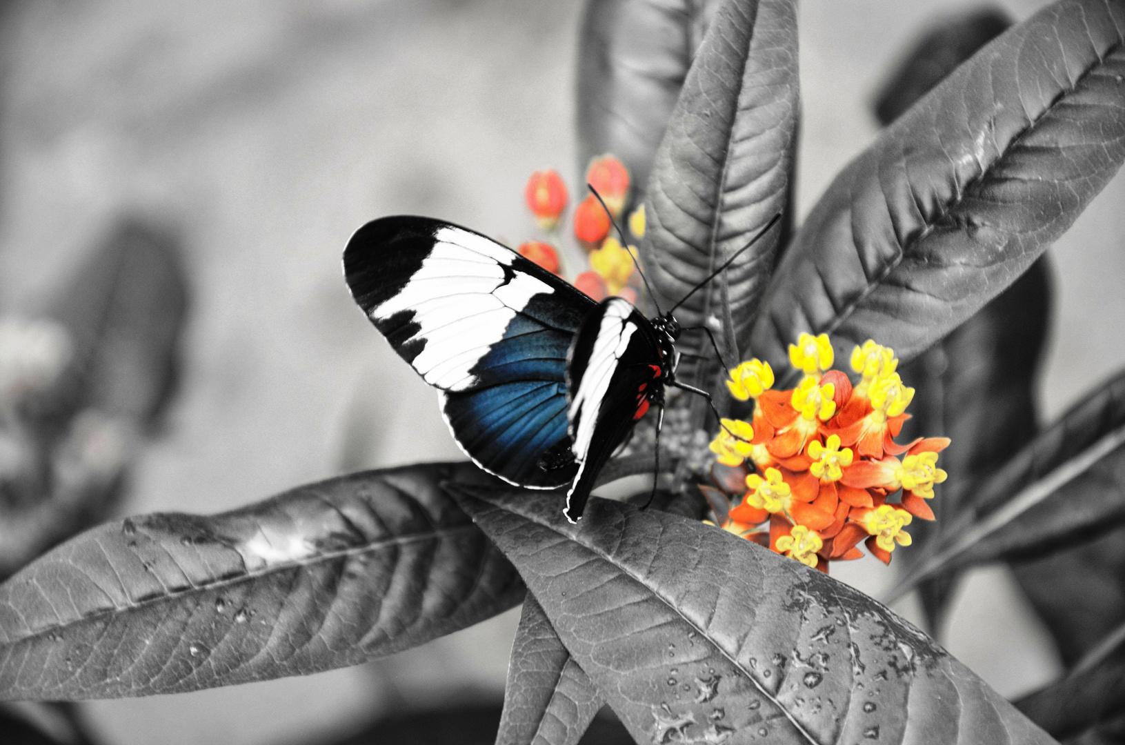 Schmetterling im Schatten