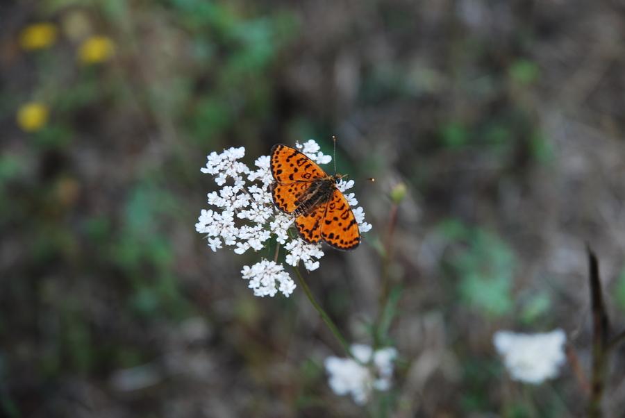 Schmetterling im Sonnenschein