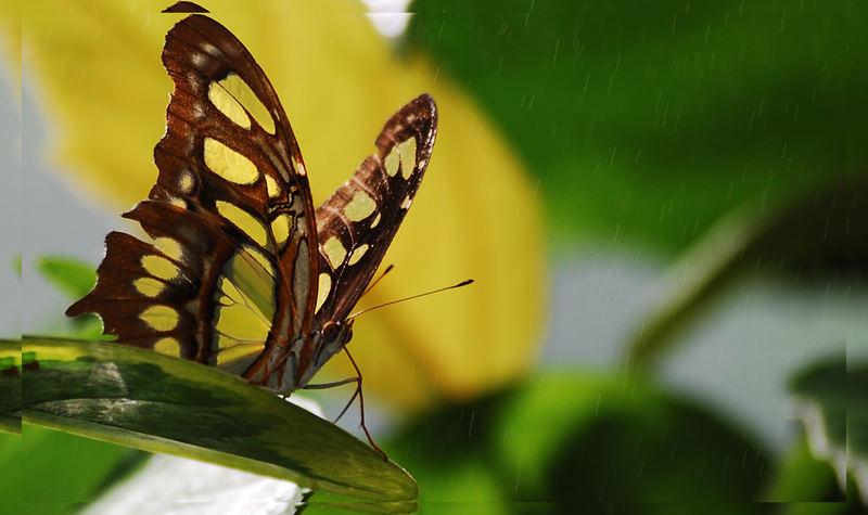 *Schmetterling im Sprühregen*