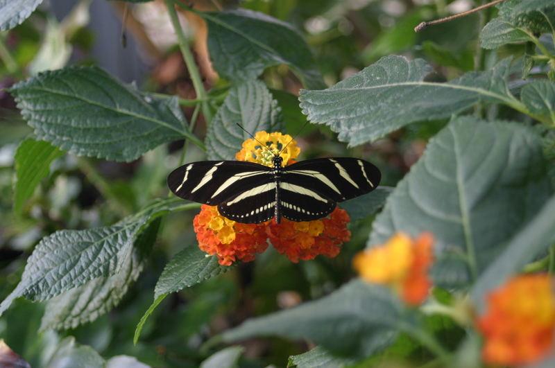 Schmetterling im Winter