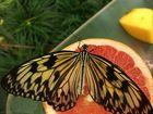 Schmetterling im Zoo Amsterdam
