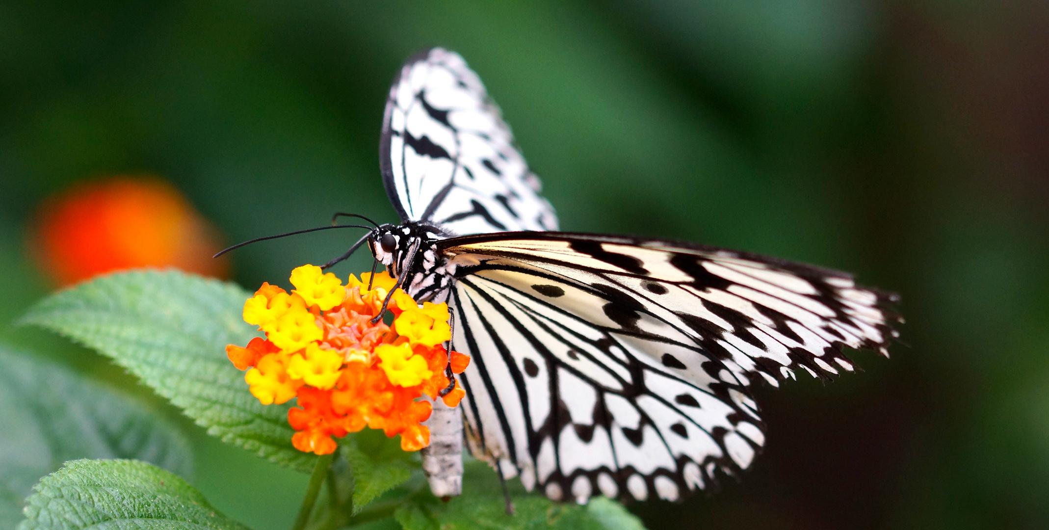 Schmetterling im Zoo Krefeld 4