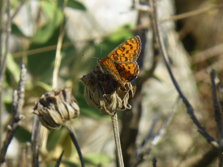 Schmetterling in Albanien